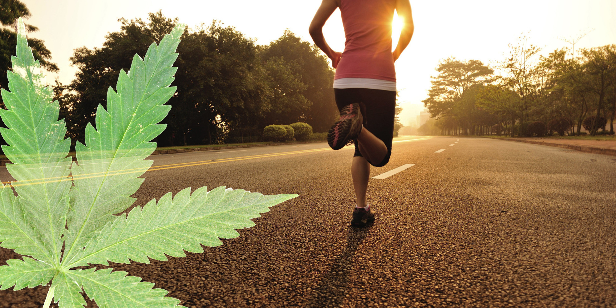 Thc cbd exercise performance